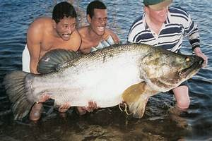 GIANT FISH! World Record Nile Perch - YouTube