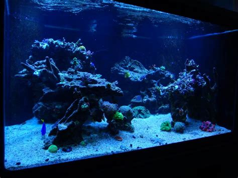 Reef Aquascaping Ideas by Aquascaping Pictures Ideas And Sketches Page 2