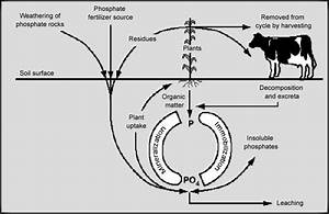 Visuals  The Phosphorus Cycle