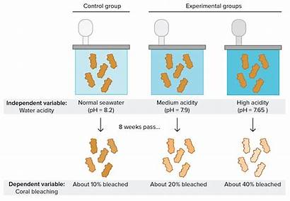 Experiment Variable Example Science Dependent Conclusion Control