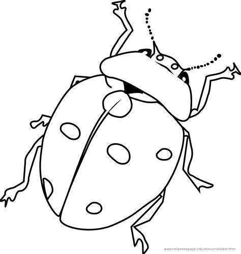 ausmalbild insekten  ausmalbilder ka fer schmetterlinge