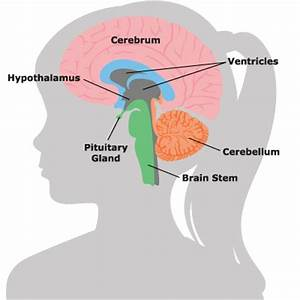 Magnetic Resonance Imaging (MRI): Brain