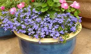 Blumentopf Balkongeländer Hängen : pflegeleichte balkonpflanzen den balkon leicht und schnell versch nern ~ Buech-reservation.com Haus und Dekorationen