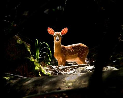 Best Images About Animals Woodland Creatures