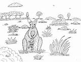 Wallaby Coloring March Joey Pages sketch template