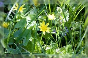 Créer Un Cadre Photo : l art de cr er un cadre photo photoshop tuto ~ Melissatoandfro.com Idées de Décoration
