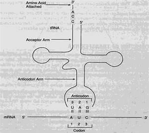 Mbbs Medicine  Humanity First   Transcription  U0026 Rna Processing