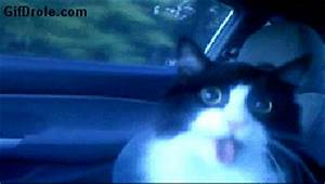 Scared Crazy Cats GIF - Find & Share on GIPHY