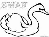 Swan Coloring Pages Colouring Colorings sketch template