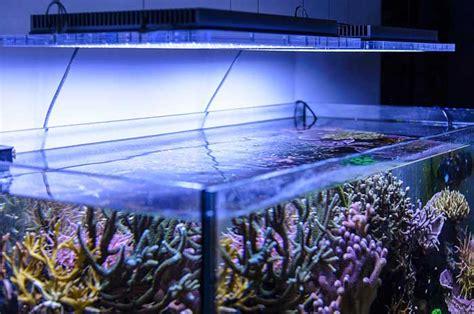 lada led acquario marino illuminazione per acquario migliori lade e plafoniere