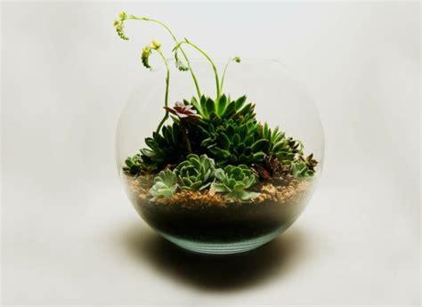 idee deco terrarium le mini jardin sinvite  la maison
