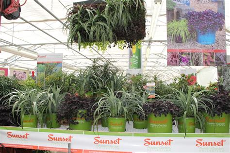 A Sunny Sunset Collection  Greenhouse Product News