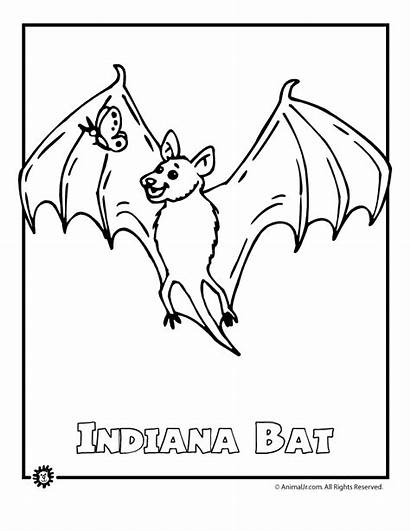 Endangered Coloring Animal Species Animals Bat Rainforest