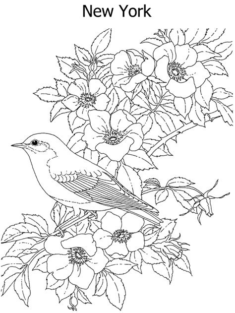 state flower  state bird coloring page