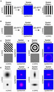 Frontiers | Spatial pattern of intra-laminar connectivity ...