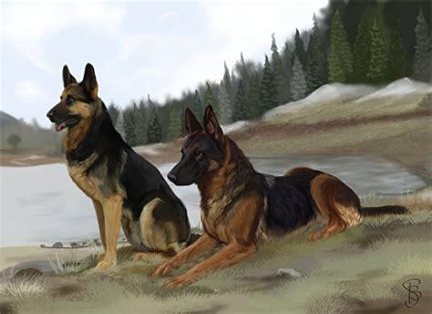 bilder shepherd deutscher schaeferhund hunde zwei tiere