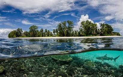 Underwater Beach Nature Seychelles Sea Shark Split