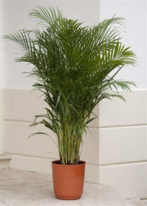 plante de bureau feng shui plante dépolluante 10 plantes qui améliorent l 39 intérieur