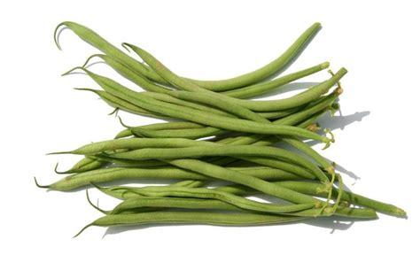 haricots verts cuisin駸 la cuisine du jardin haricots beans