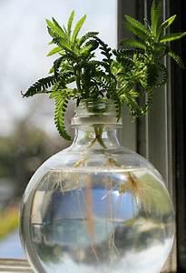 Bouture Plante Verte : r ussir son hydroculture jardin d 39 int rieur pinterest ~ Melissatoandfro.com Idées de Décoration