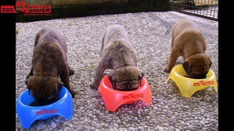 alimentazione per cani casalinga alimentazione casalinga o crocchette per il