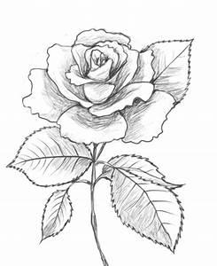 Cute Drawings Love Rose Image 259366 On