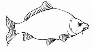 How To Draw A Carp Fish How To Draw A Carp - Easy Origami