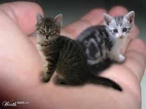 tiny cats tiny kittens worth1000 contests