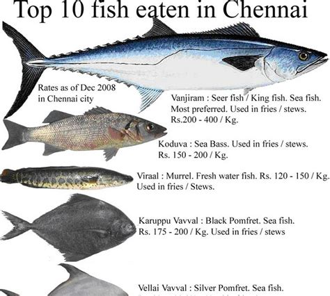 page cookbooks top  fish eaten  chennai