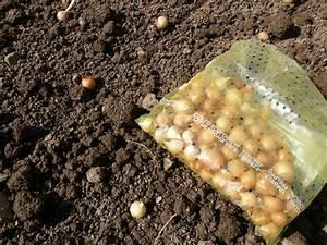 Quand Planter Des Dahlias : quand planter oignon fleur ~ Nature-et-papiers.com Idées de Décoration