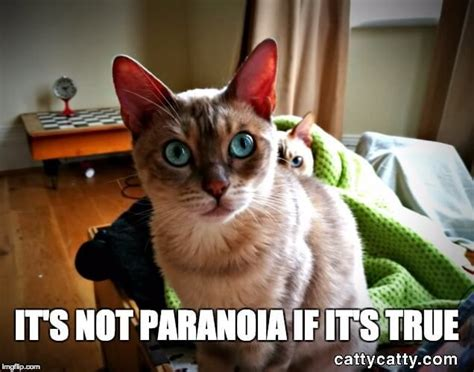 13 Best Funny Cats Images On Pinterest Cassie Haircut Tutorial Red Hair Vegeta Long No Layers Hairstyles For Kindergarten Picture Day Quick And Easy To Do With Curly Zero Fade Hairstyle Video In India Pretty Pinterest