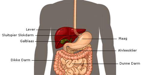Gastro-oesofageale reflux - wikipedia