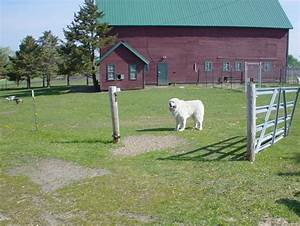 great pyrenees house 28 images 17 best ideas about With great pyrenees dog house plans