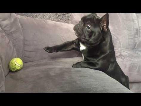 hundemantel französische bulldogge total s 252 223 e franz 246 sische bulldogge kommt nicht an ihren mega lustig