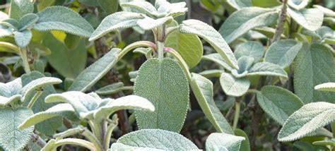 les herbes aromatiques en cuisine les herbes aromatiques en cuisine sedgu com