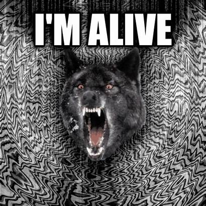 Wolf Insanity Alive Meme Livememe Text Own