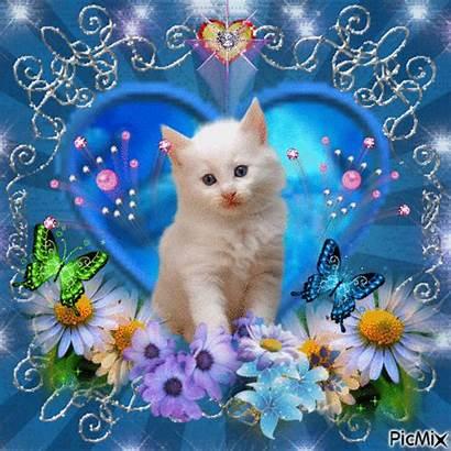 Sweet Kitty Picmix Morning Cat Kittens Cats