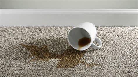 How Can Someone Remove Dried Coffee Stains From A Carpet? How To Remove Burnt Plastic From Carpet Lowes Installation Phone Number Cleaning Near Londonderry Nh La Carpeta Roja El Barco Dry Port Melbourne Deals San Antonio Fizzy Drink Stains Supply Company Tx
