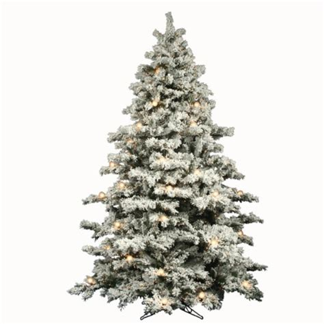 places to buy your christmas tree the edinburgh reporter
