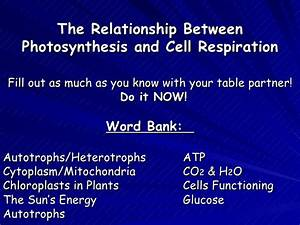 Cellular Respiration Powerpoint Unit 5 Continued  Revised2006