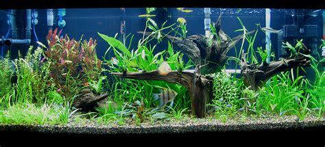 My planted 75g Amazon tank  Aquarium Forum