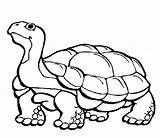 Tortoise Gopher Gumbo Limbo Coloring Burrow Ages Bubble Wrap Activity Craft sketch template