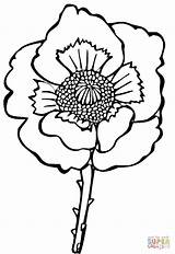 Poppy Flower Coloring Drawing Line Sheets Poppies Colouring Easy Clipart Printable Supercoloring Remembrance Clip sketch template