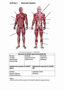 Muscular System Diagram Blank - Anatomy Organ
