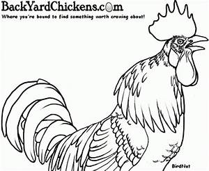 official byc chicken coloring book submissions page 27 With backyardchickenscom forum uploads 37420basicthermostatwiringjpg
