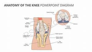Anatomy Of The Knee Powerpoint Diagram