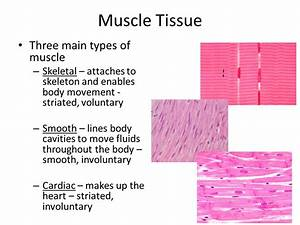 Anatomy  U0026 Physiology 1 Mid Term Flashcards By Proprofs