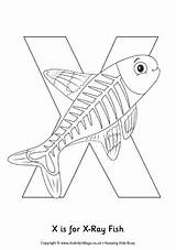 Fish Xray Colouring Preschool Alphabet Coloring Pages Crafts Letter Printable Ray Animal Activity Template Animals Sheets Words Abc Activityvillage Rays sketch template