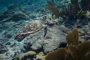 Sea Turtle Facts — SEE Turtles