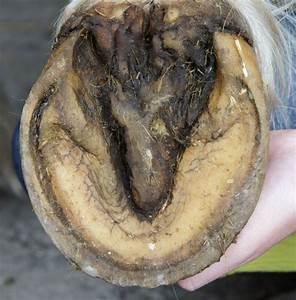 Barefoot Horse Blog  Hoof Reading 3